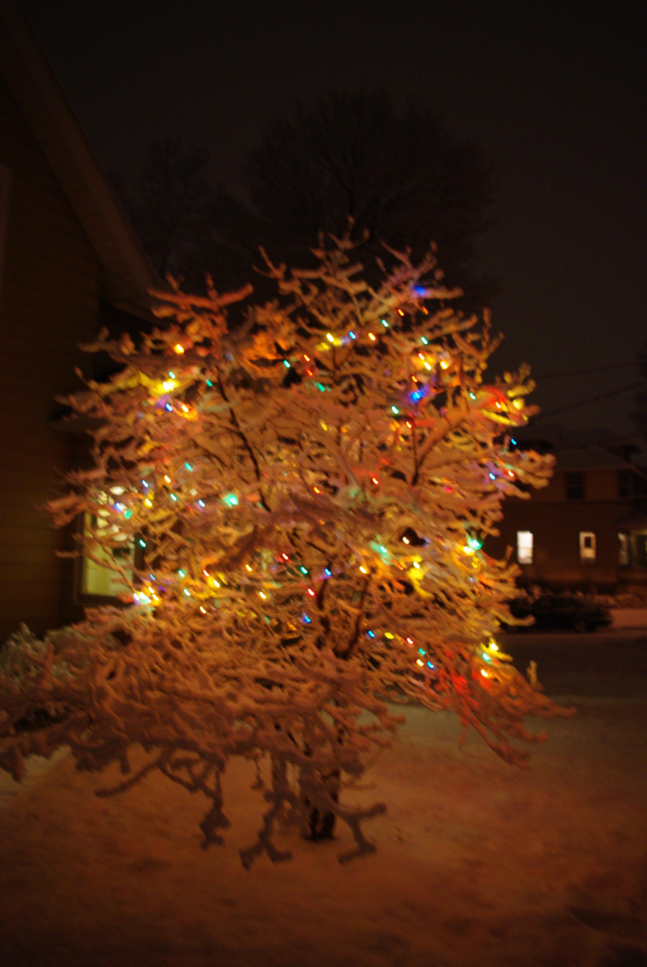 Below ... & Rare Snow Scenes For 2012 On Madison Isthmus | CAFFEINATED POLITICS azcodes.com